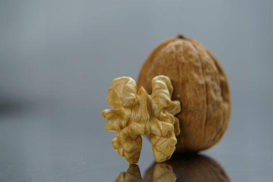 Walnuss - alles enthalten, damit daraus ein Baum entstehen kann